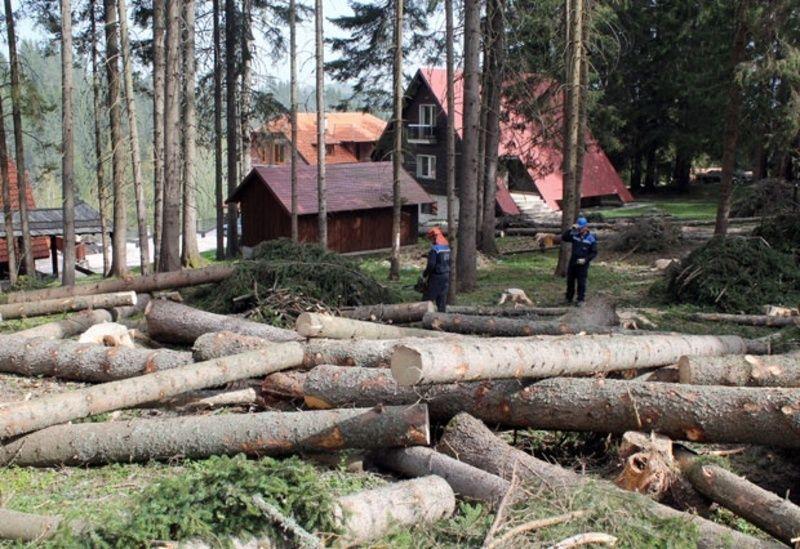 Моторне тестере заводе ред у оболелој шуми на Бабића брду