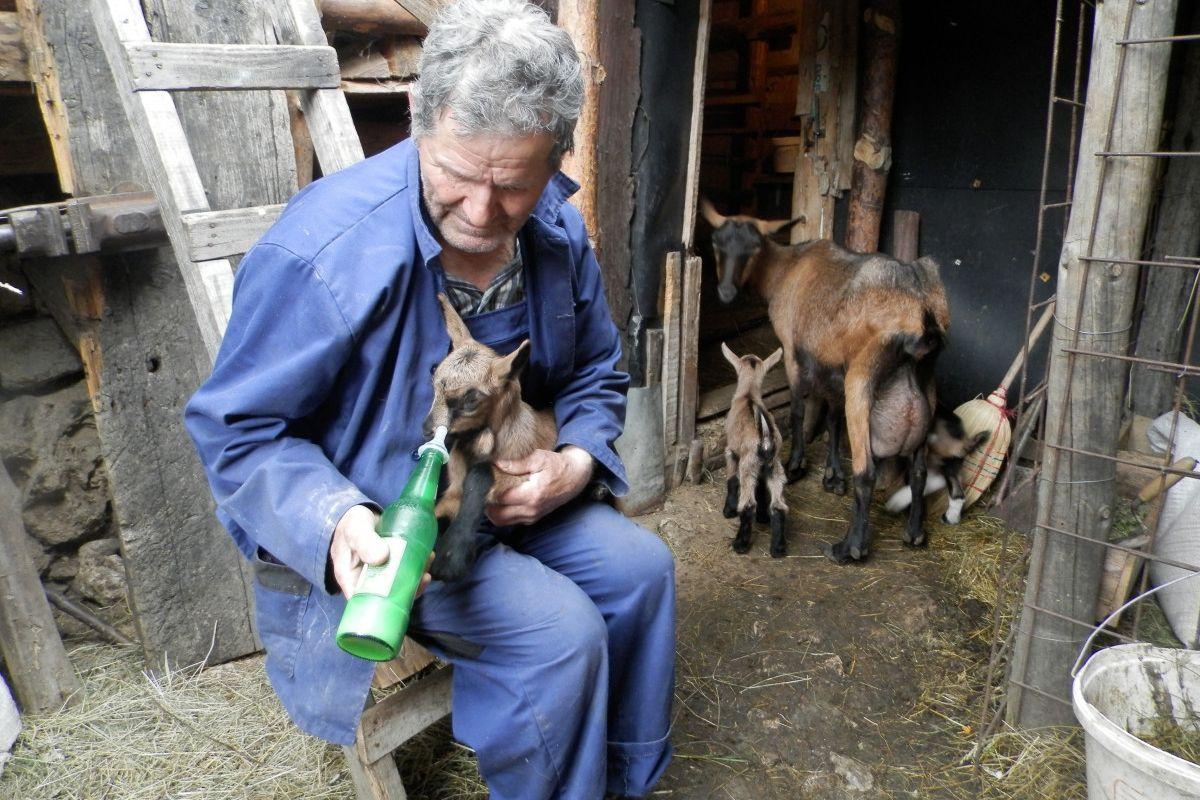 Hajro pazi na jarad i koze bolje nego na sebe