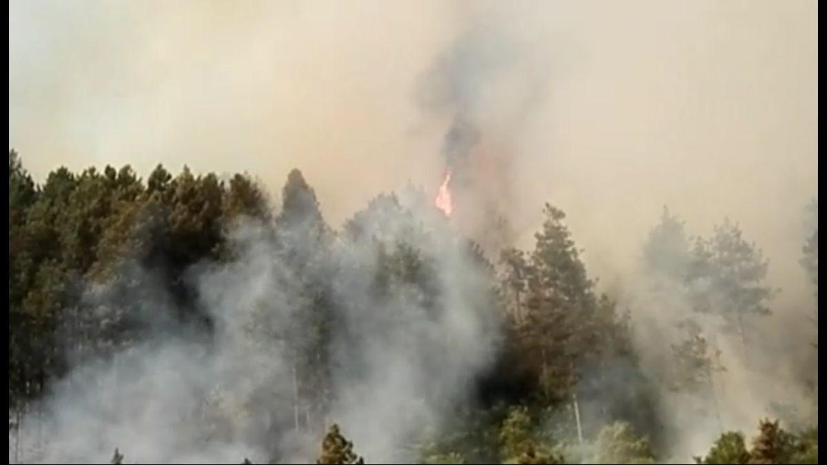 Ватра гута борову шуму недалеко од болнице - фото ГЗС