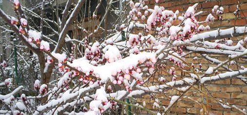 Sneg i behar