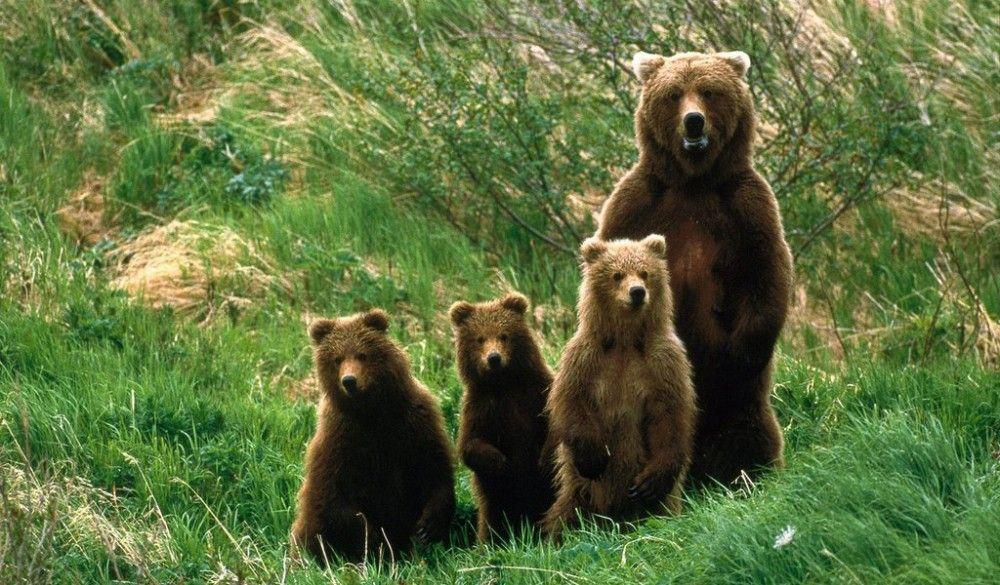 Medved i mečići