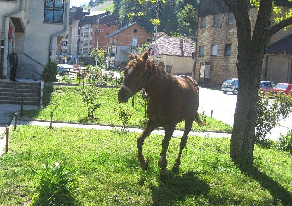 Kobila u centru grada