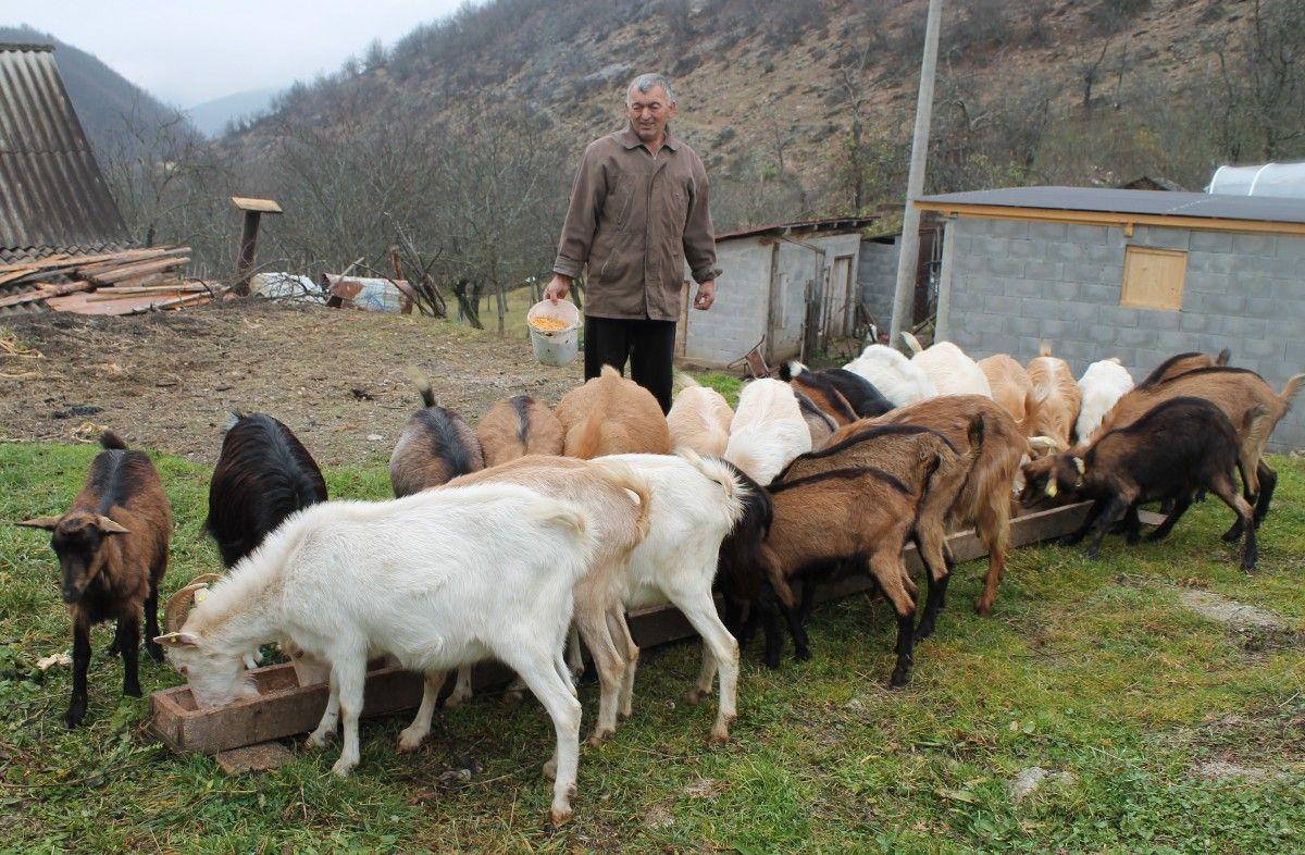 """Закућили од """"рога"""" - стадо Раденка Боранијашевића"""