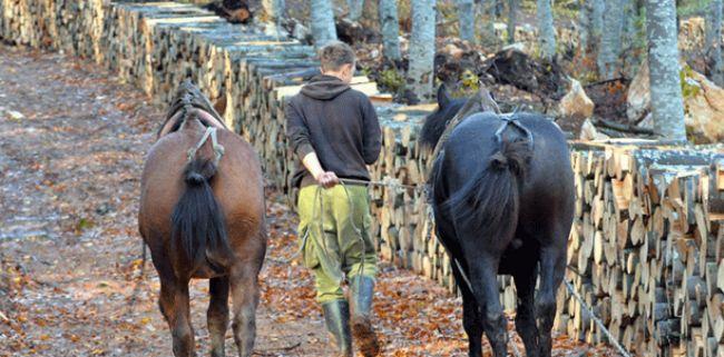 Konj i drva