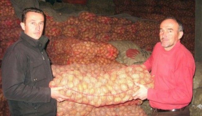 Branko Gujaničić, krompir