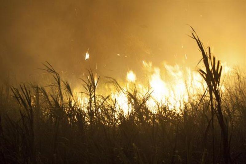 Požar kod Prijepolja