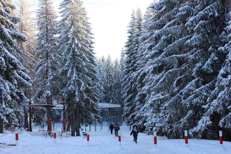 Zlatar zima sneg