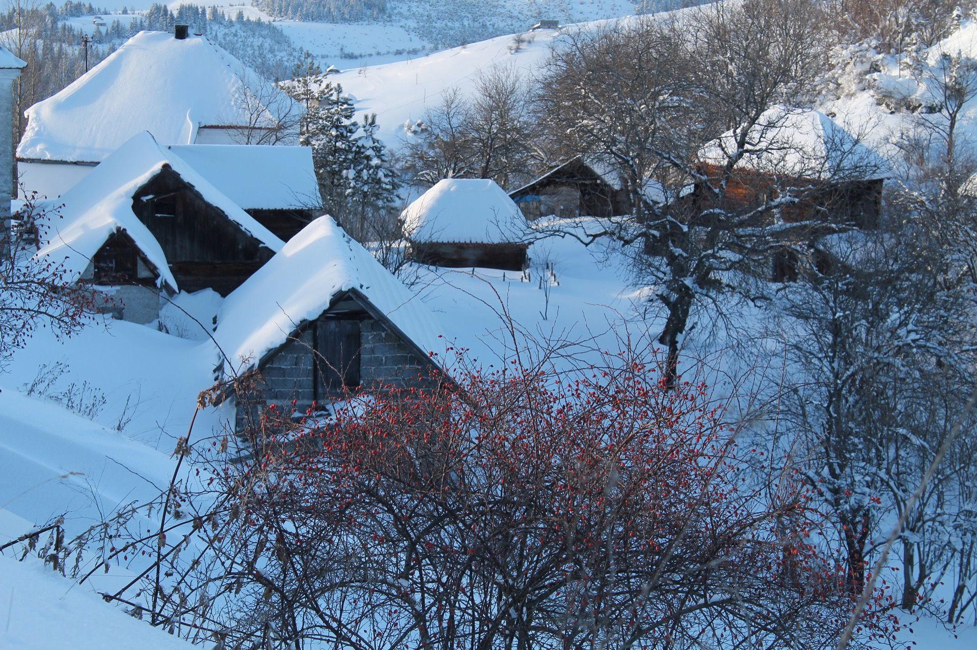 Златар под снегом