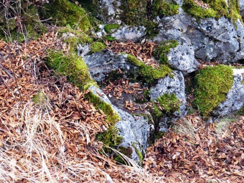 Савина столица у камену на увачким  стенама