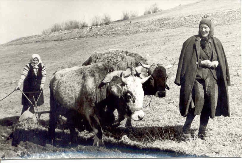 Жене су замењивале мушкарце у Комаранима
