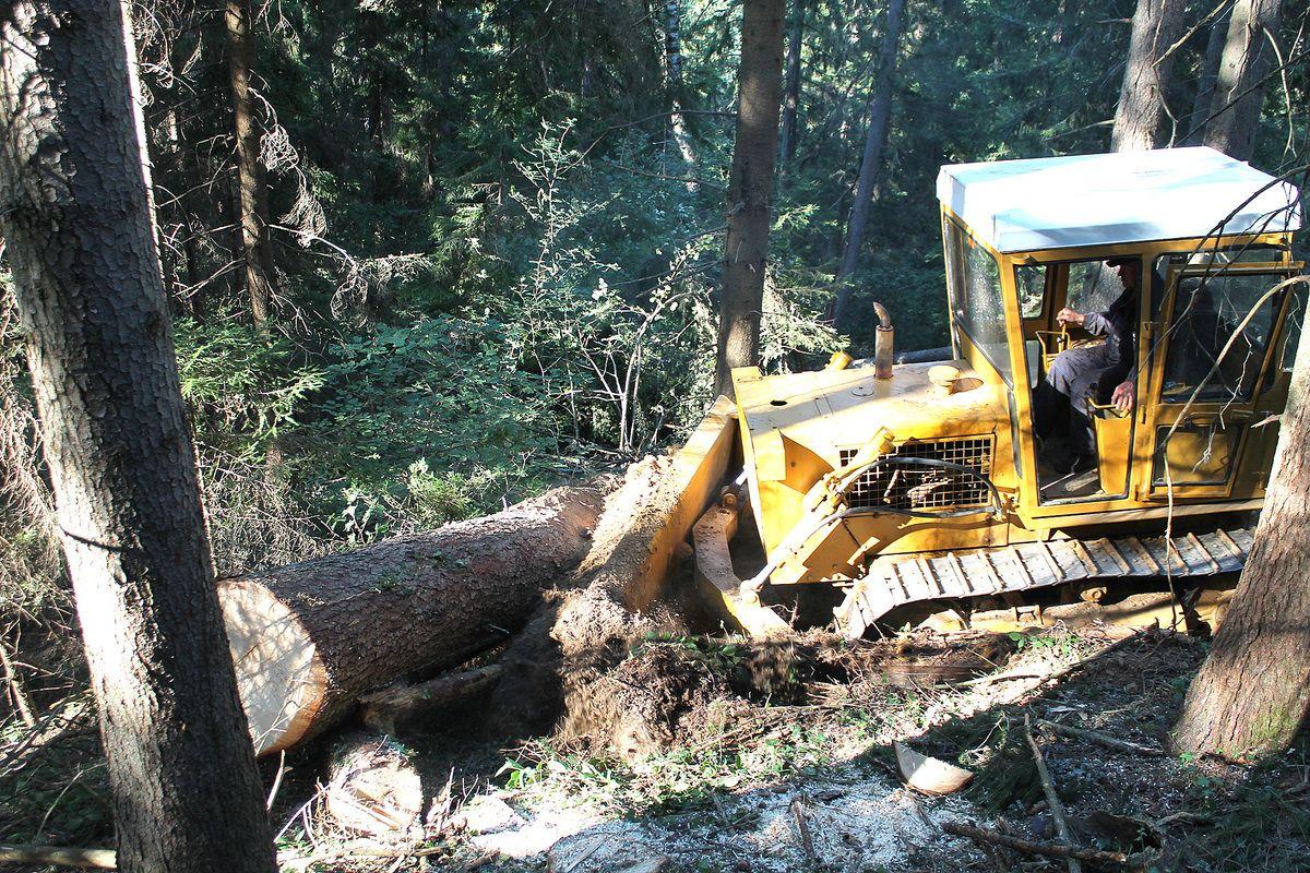 Недовољно искоришћено шумско благо Смудинога