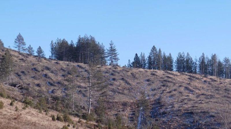Осушене шуме