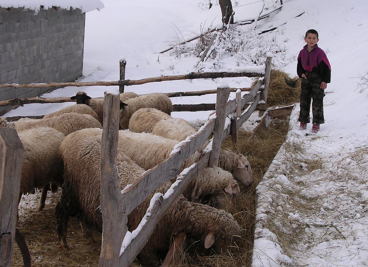 Ново српско задругарство - кључна тема скупа