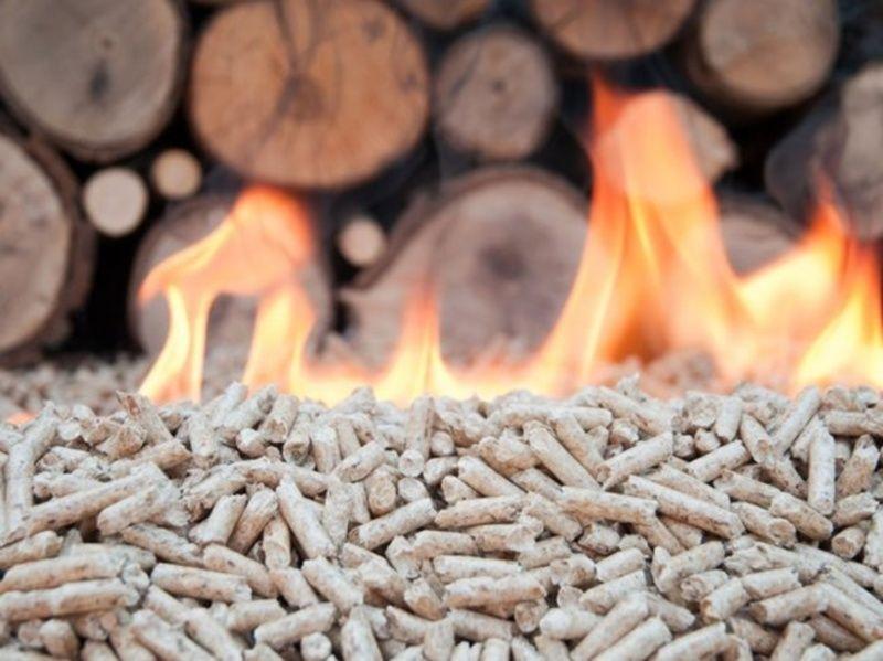 Ilustracija / biomasa