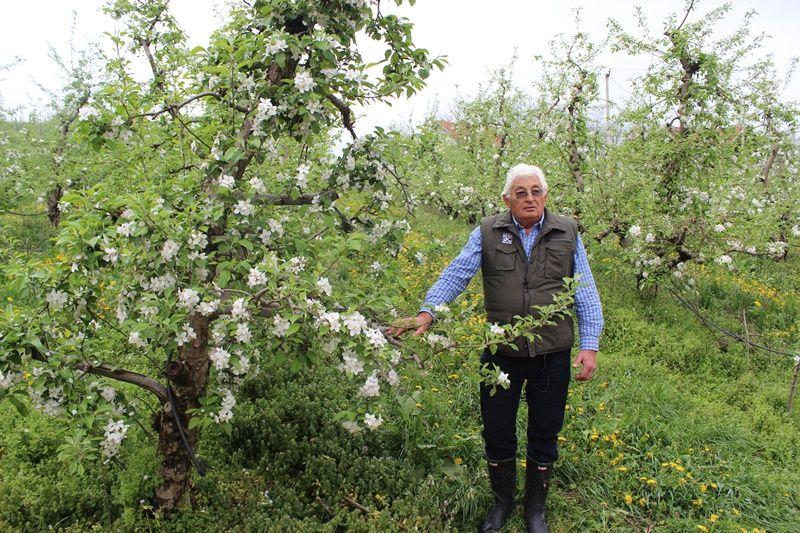 Др Светомир Стаменковић данас у свом јабучњаку