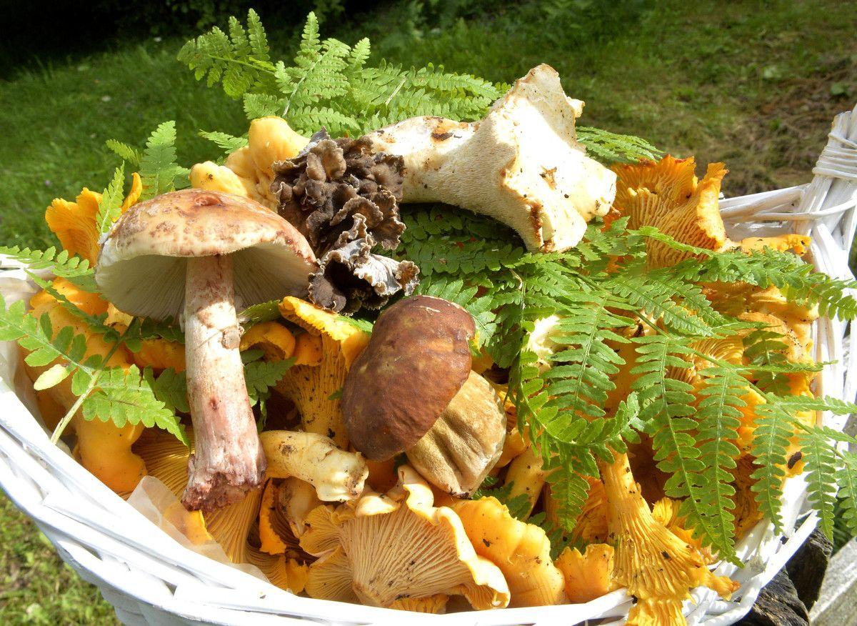 Печурке