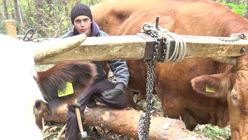 Стефан Лаковић (18) иако се школује у Ужицу, сваки слободан тренутак користи да дође у Лијепу раван да помогне родитељима у шуми
