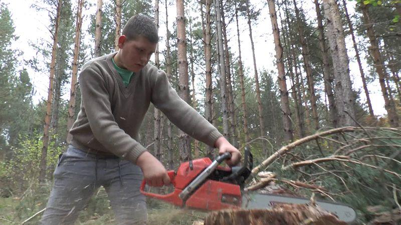 Вељко Лаковић (15) у шуму је од своје 10 године од када је научио да барата моторном тестером