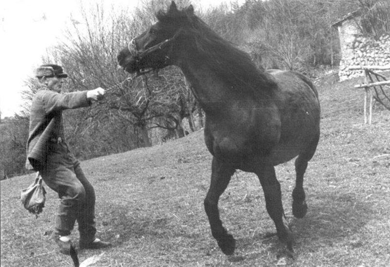 Без коња нема живота у беспућу