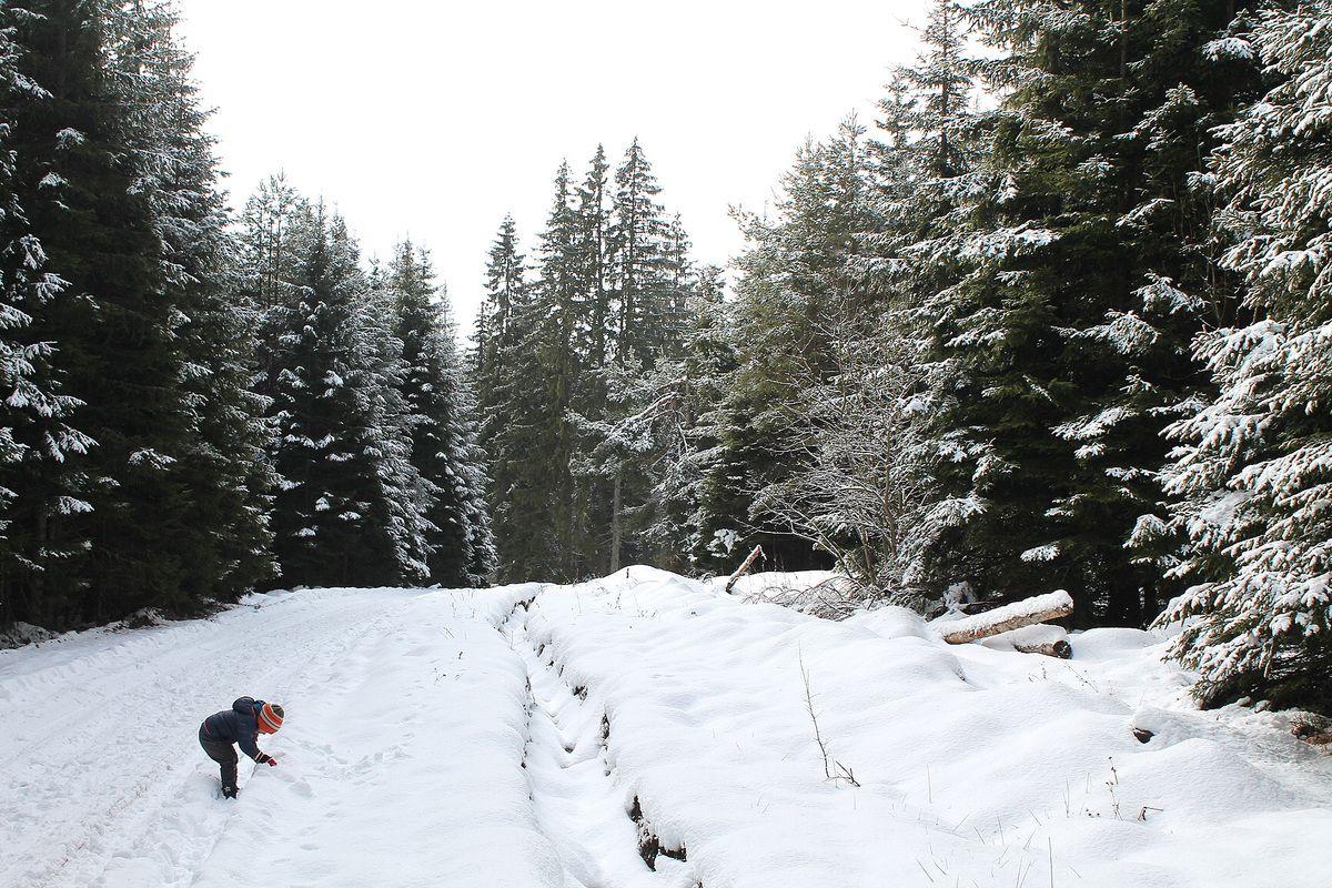 Зимска идила - пут за Правошеву