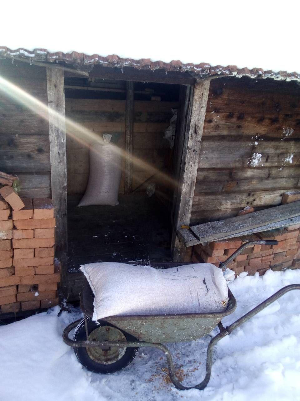Пропала гозба – џак јутрос враћен у амбар (Снимио Миломир Пауновић)