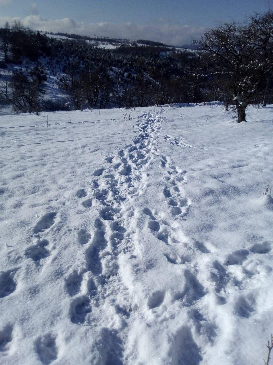 Трагови  звери у снегу  засеока под Муртеницом