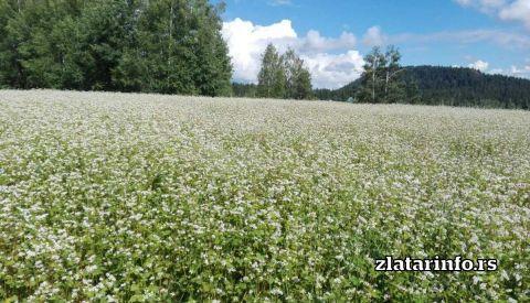 """Priroda - Kuća za odmor """"Amzići"""" Zlatarsko jezero"""