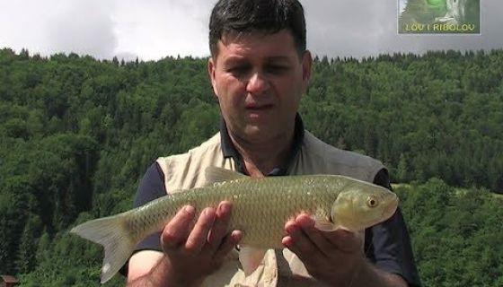 Lov i ribolov - Zlatarsko jezero - Bela riba