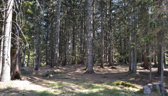 Zlatarska šuma