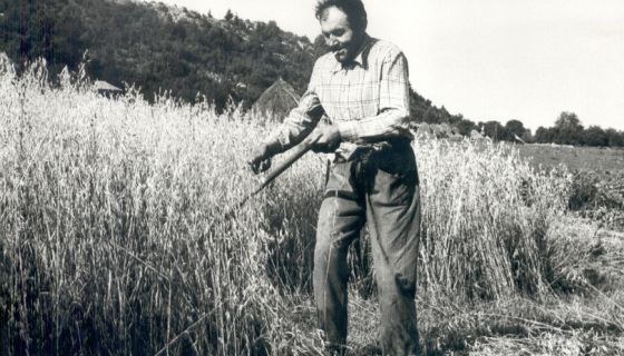 Vito Purić