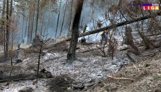 Пожар на Голији прогутао 10 хектара шуме