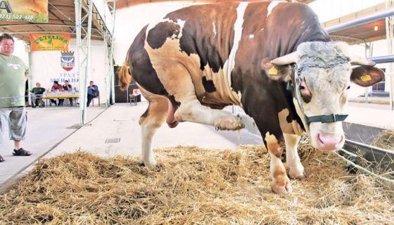 Размена важи за регистроване пољопривредне произвођаче (Фото А. Васиљевић)