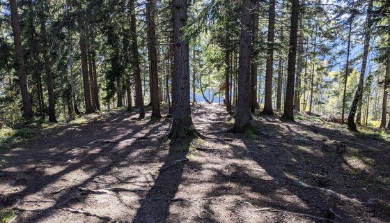 Put kroz šumu prema vidikovcu