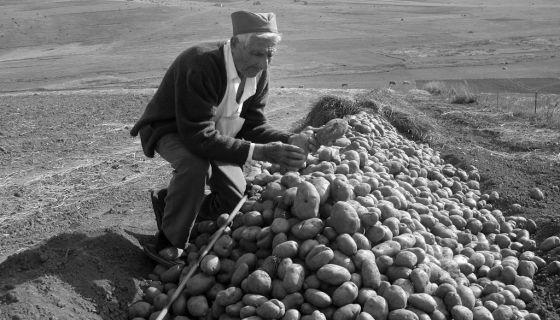 Трап - складиштење кромпира у земљи у Калипољу